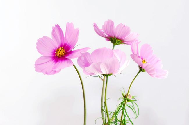 摄图网-好看的粉红色小花.jpg