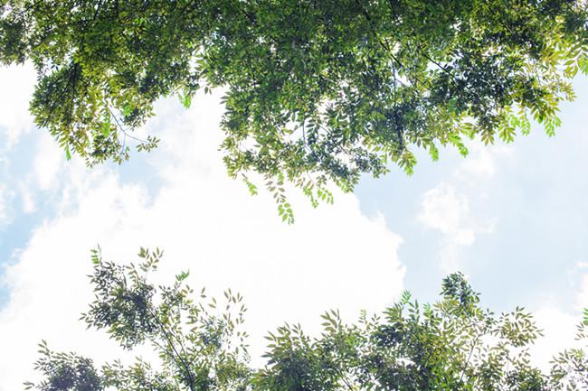 摄图网-树林树叶蓝天白云自然风光.jpg