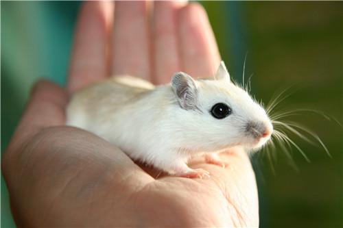合适属鼠的网名