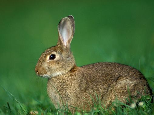 属兔人的性格分析_12生肖